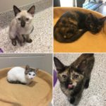 Every day is Kitten Season at Foothills!